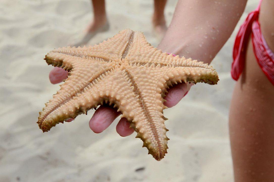 Estrella mar Varadero Cuba