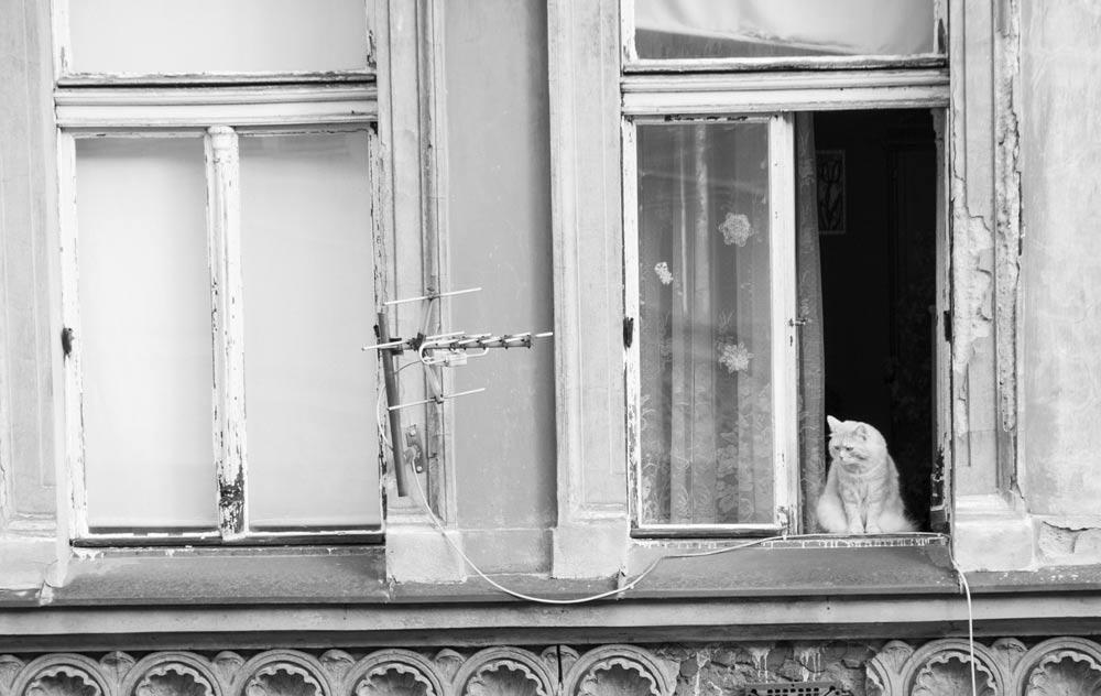 el-gato-en-la-ventana