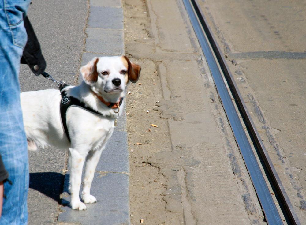 retrato-perro-en-praga