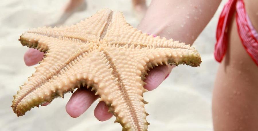 estrella-de-mar-en-varadero-cuba